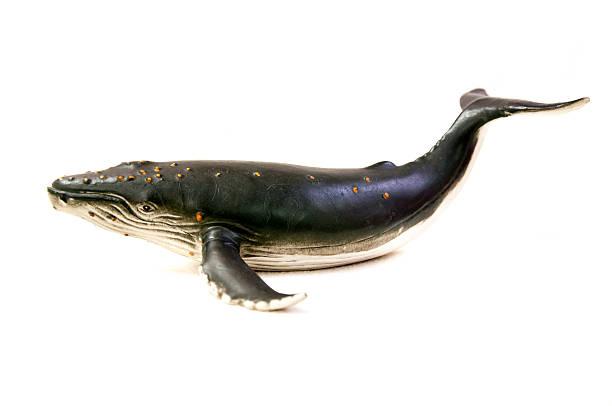 Baleine à bosse modèle - Photo