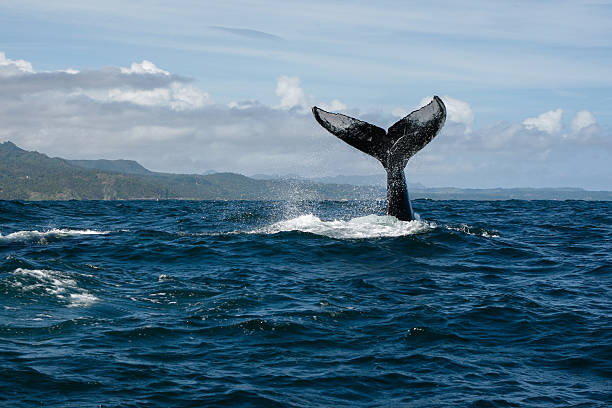 Pics whale tail Whale tail
