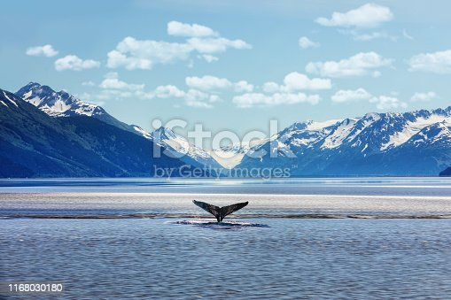 Humpback whale tail with icy mountains backdrop Alaska