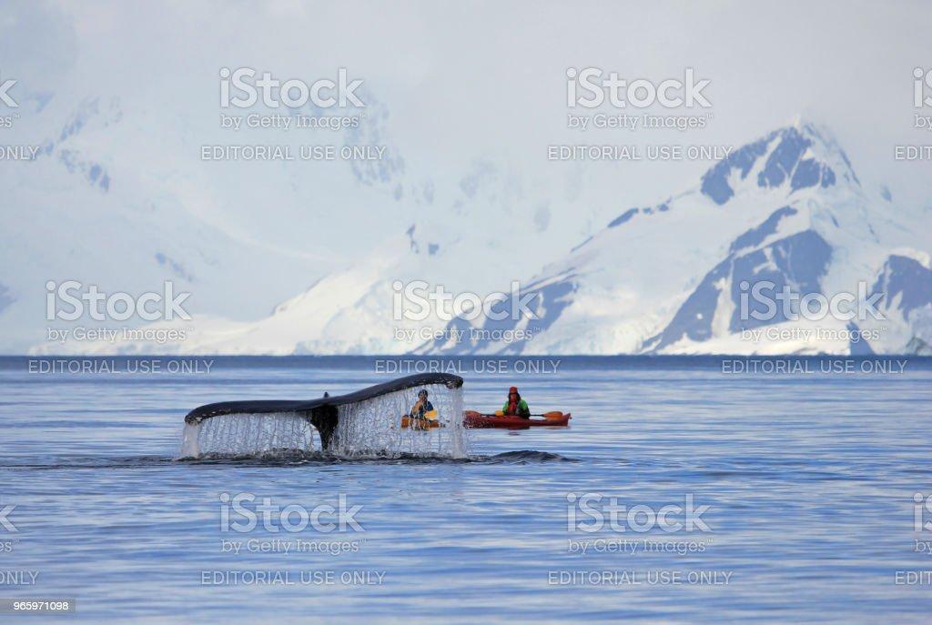 Bultrug staart met kayak - Royalty-free Antarctica Stockfoto