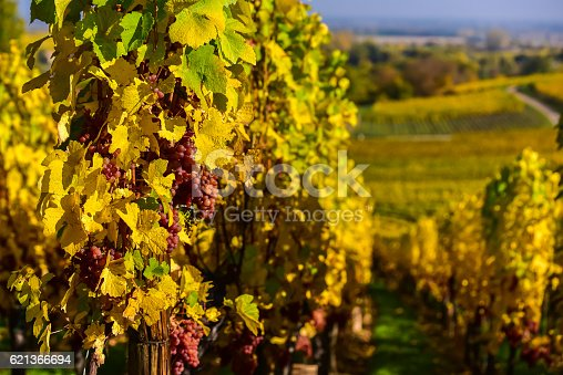 925850210 istock photo Hunawihr - small village in vineyards of alsace - france 621366694
