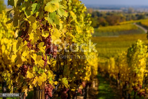 925850210 istock photo Hunawihr - small village in vineyards of alsace - france 621370144