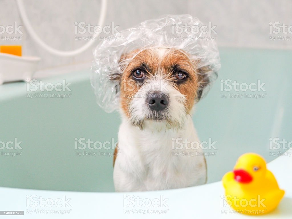 Hund Haustier Tier Badewanne Stock Photo More Pictures Of Animal