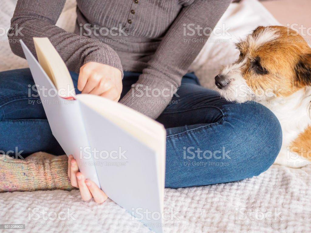 Hund, Haustier, Tier, Teenager, Buch stock photo