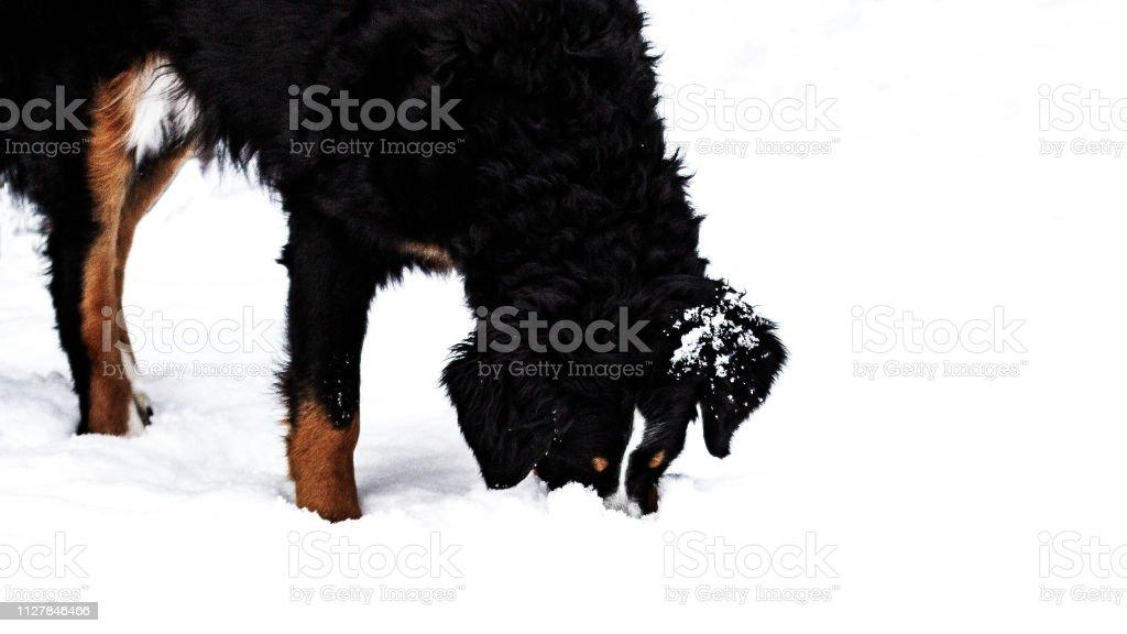 Hund Im Schnee – Foto