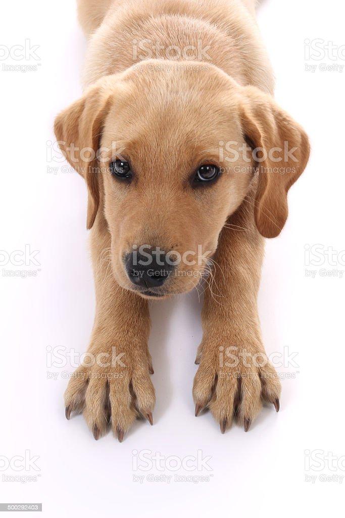 Hunde - 49 – Foto