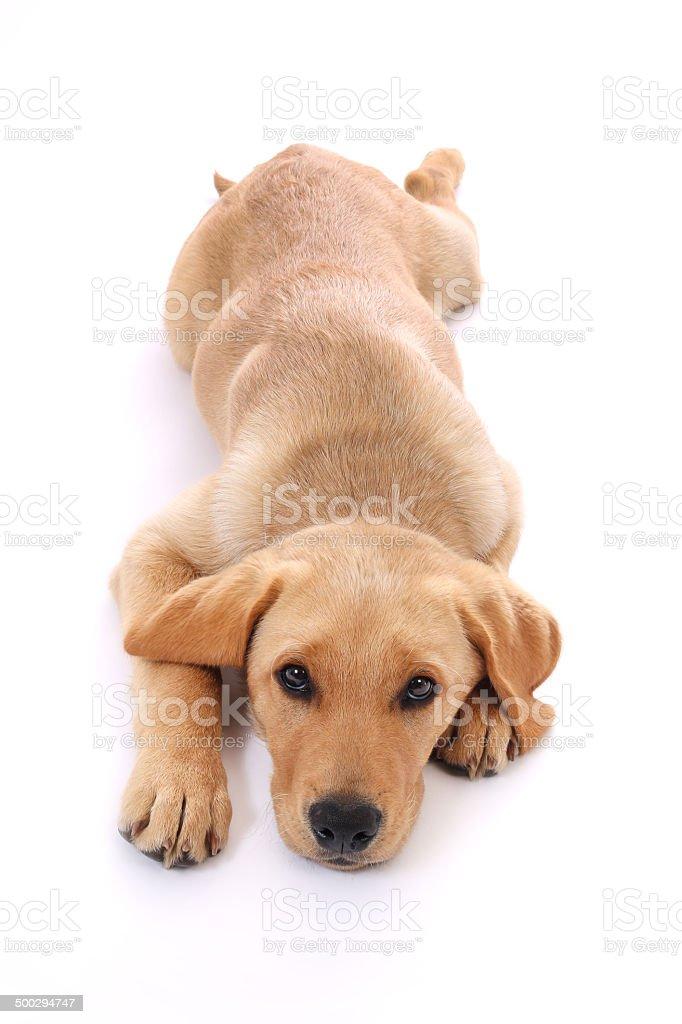 Hunde-51 stock photo