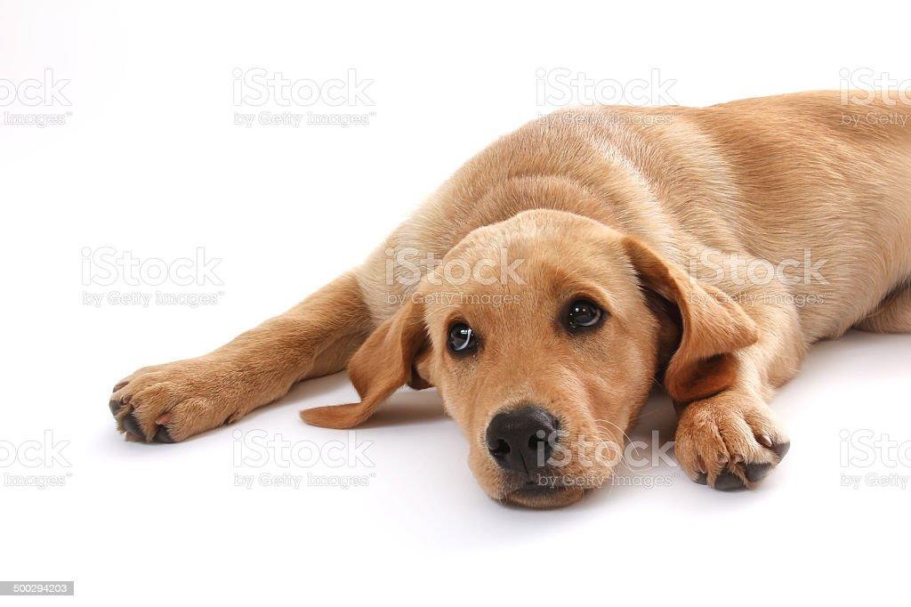 Hunde-55 stock photo