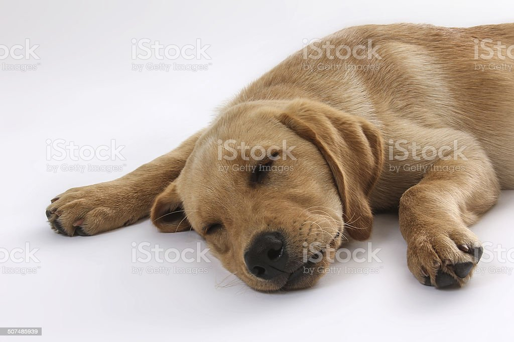Hunde-57 stock photo