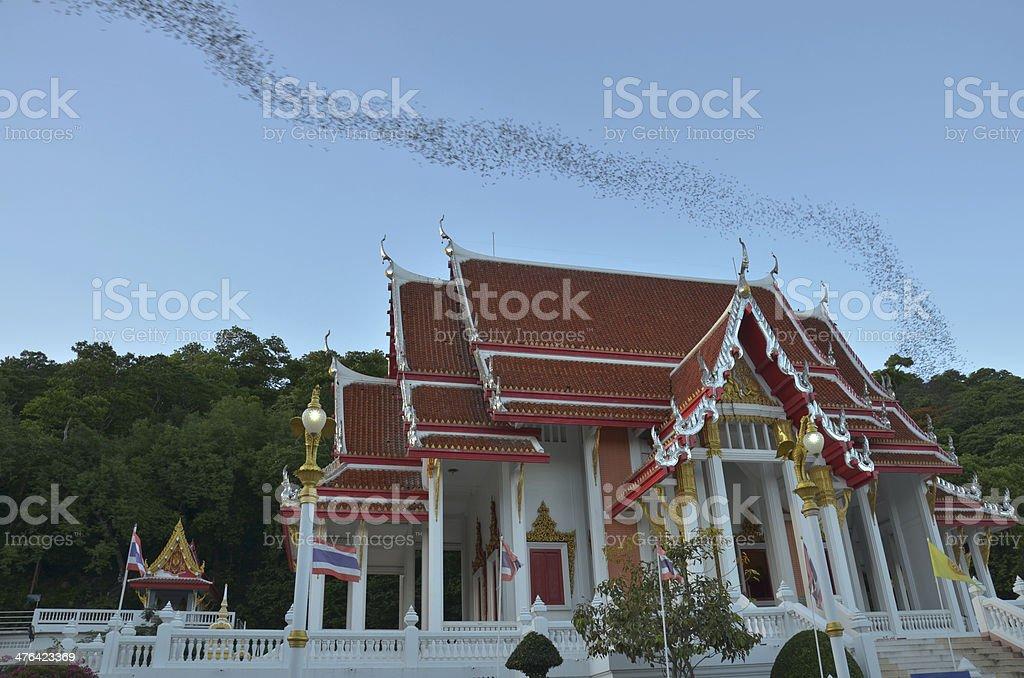 Hundred Million Bats at Wat Khao Chong Pran, Ratchaburi Thailand royalty-free stock photo