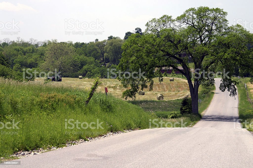 Hundred Year Old Elm Tree royalty-free stock photo