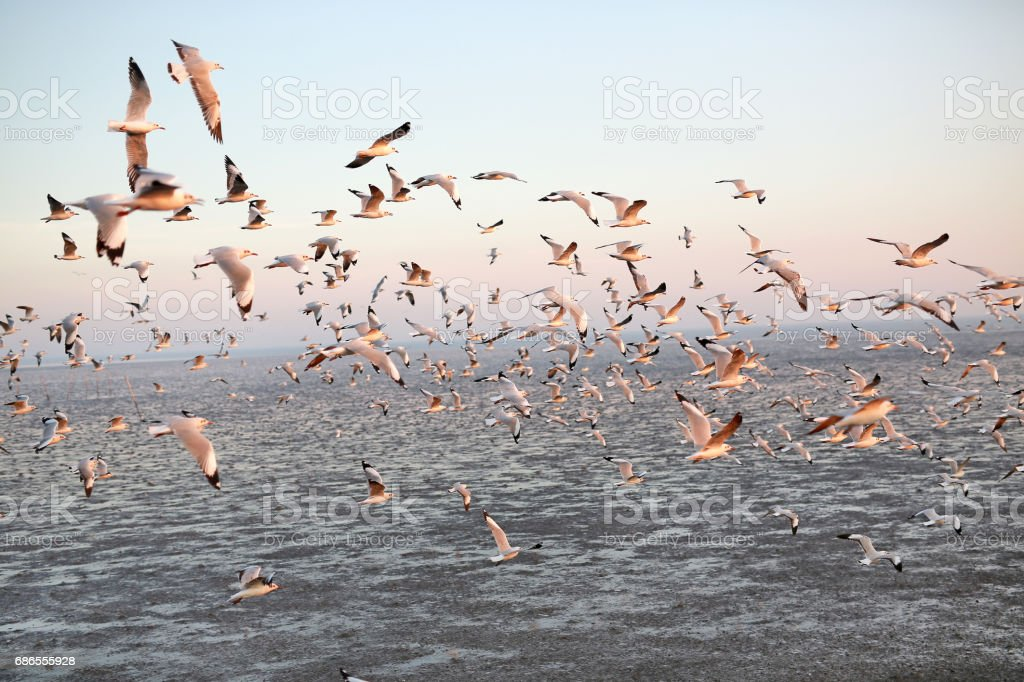 Hundreds of seagulls flying in the sky at sunset. photo libre de droits