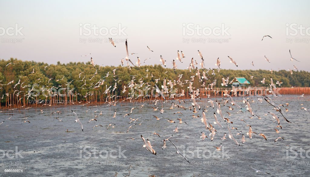 Hundreds of seagulls flying in the sky at sunset. Lizenzfreies stock-foto