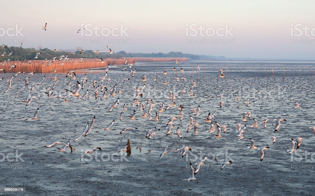 Hundreds of seagulls flying in the sky at sunset. royalty free stockfoto