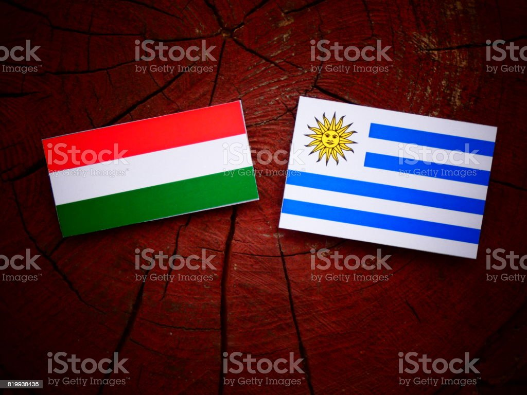 Hungarian flag with Uruguaian flag on a tree stump isolated stock photo