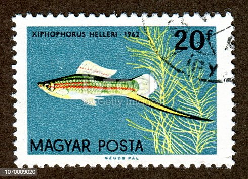Hungary stamps circa 1962 shows a Tropical Fish