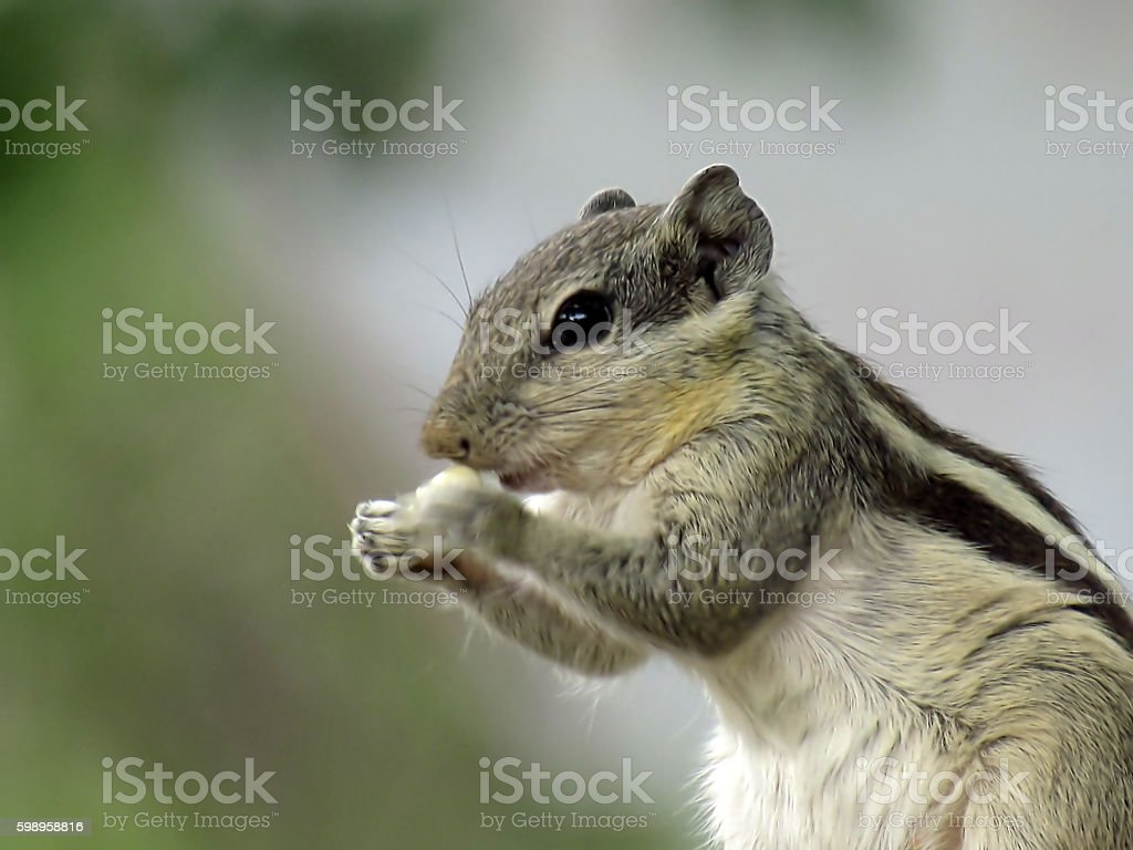 Hunger Games. stock photo