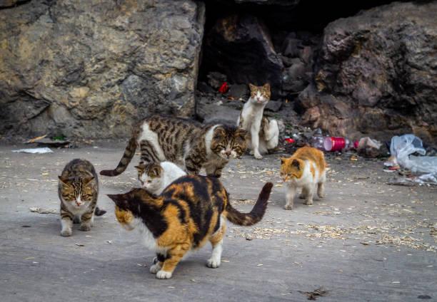 hungry and tired alley cats in garbage - desperdício alimentar imagens e fotografias de stock