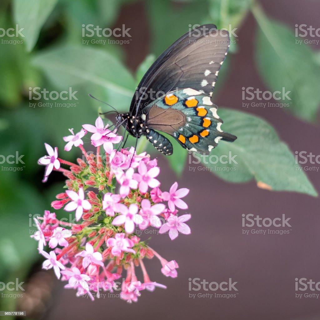 Hongerige Butterfly - Royalty-free Beschrijvende kleur Stockfoto