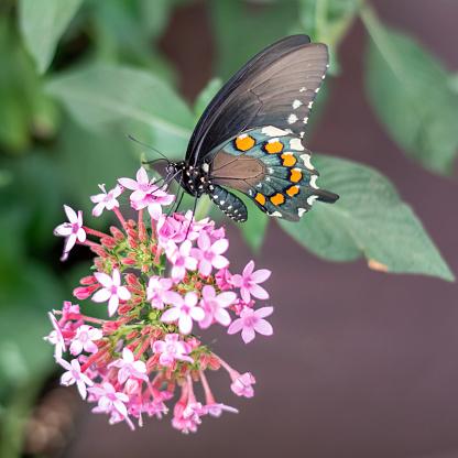Hongerige Butterfly Stockfoto en meer beelden van Beschrijvende kleur
