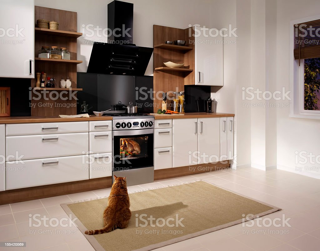 Hungry Cat royalty-free stock photo
