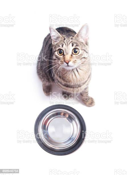 Hungry cat sitting near empty bowl picture id698946734?b=1&k=6&m=698946734&s=612x612&h=6elk3eogcajomcixzfvo0wlzzupviagz7i09kyzycba=