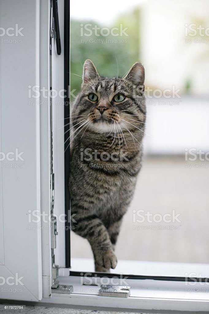 Hungry cat trying to enter stock photo