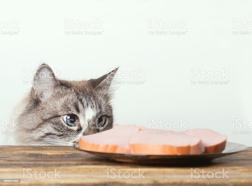 hungry cat wants to steal a sausage stock photo