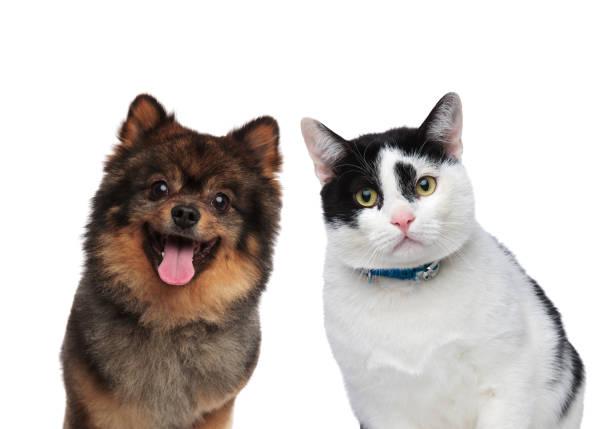 hungry dog and cat friends waiting for lunch - котик яркий стоковые фото и изображения