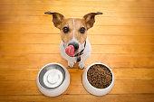 istock hungry dog bowl 627540616