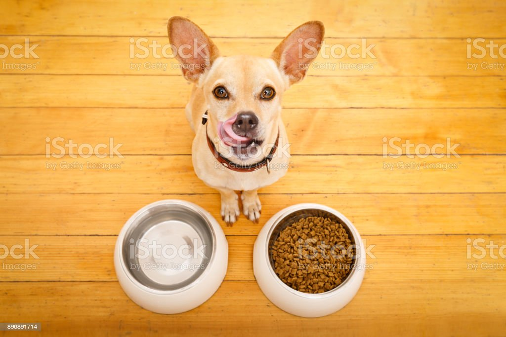 hungry dog bowl stock photo