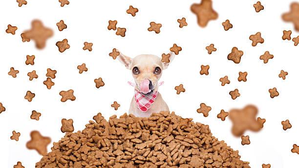 Hungry dog in a food rain picture id487520018?b=1&k=6&m=487520018&s=612x612&w=0&h=eiidbidebbzueajikiu617iszhxsb2od7q4jhijpcgi=