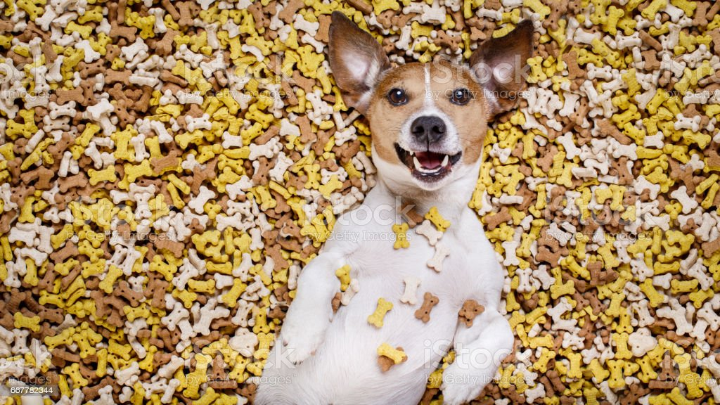hungry dog in big  food mound stock photo