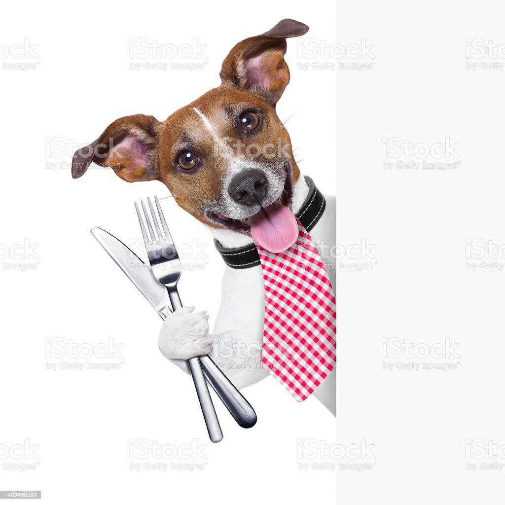 Faim de chien - Photo