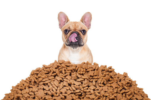 hungry  bulldog dog behind a big mound or cluster of food , isolated on white background