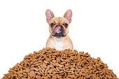 istock hungry dog 497448466