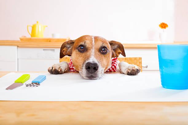 hungrig hund - schmaler tisch stock-fotos und bilder