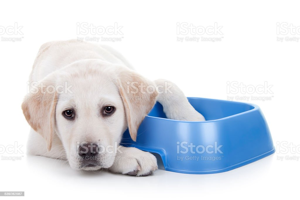 Hungry Dog stock photo