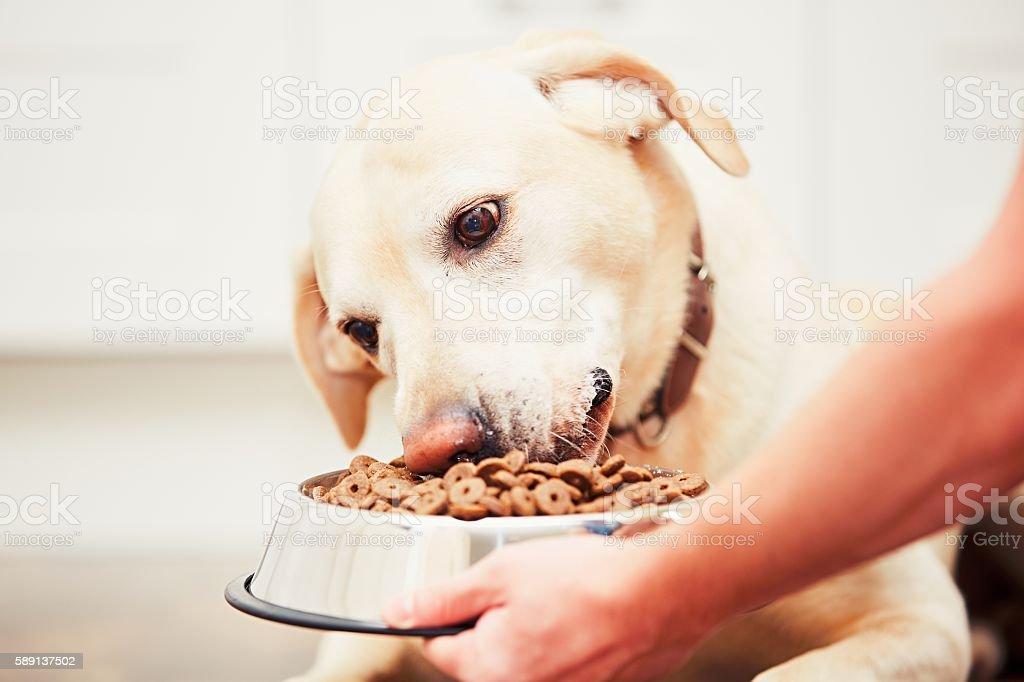 Hungry dog stock photo