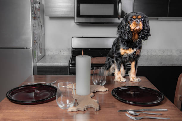 A hungry dog stands on the table in a kitchen stock photo