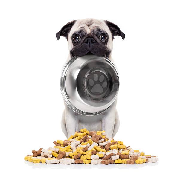 Hungry dog with bowl picture id521499244?b=1&k=6&m=521499244&s=612x612&w=0&h=t7hbb2 83w2aj6p6qqruzch1xz2pukfw4rfo9do1lgq=