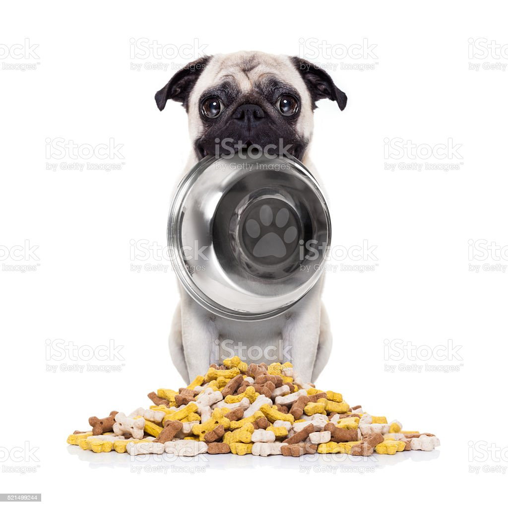 hungry dog with bowl stock photo