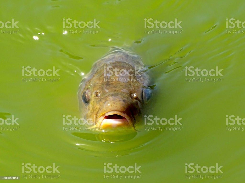 Hungry fish stock photo