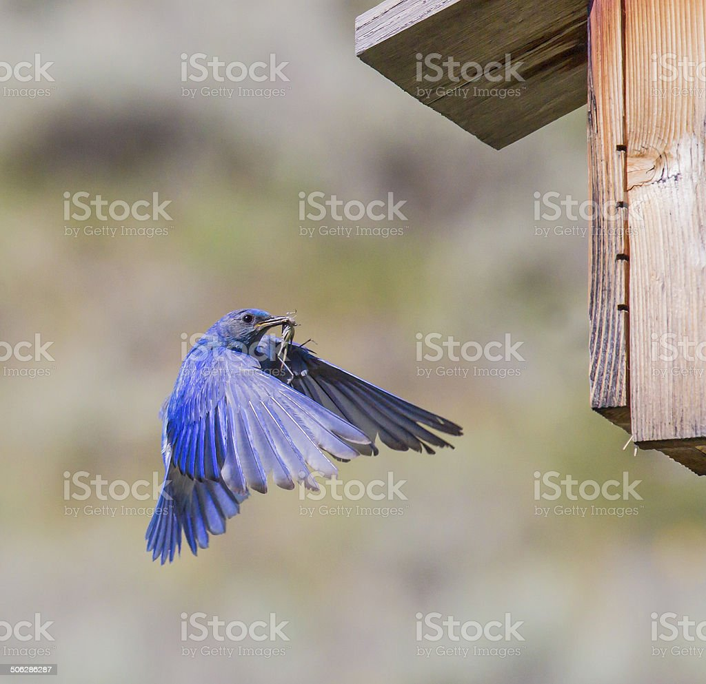 Hungry for Hoppers Without Birdhouse stock photo
