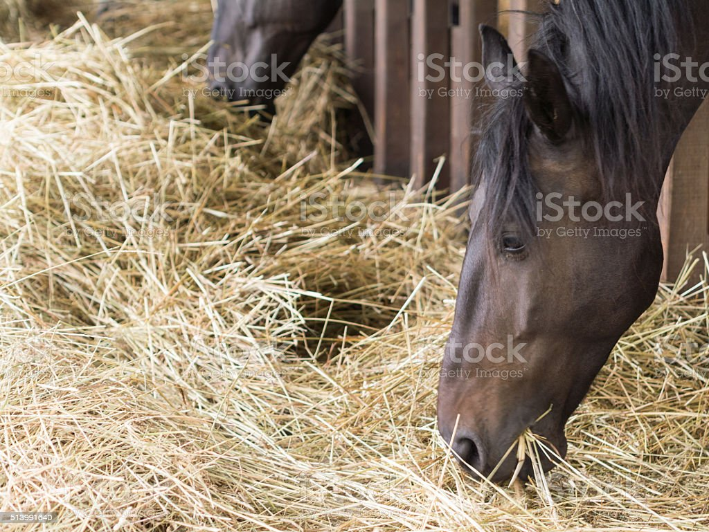 hungry horse stock photo