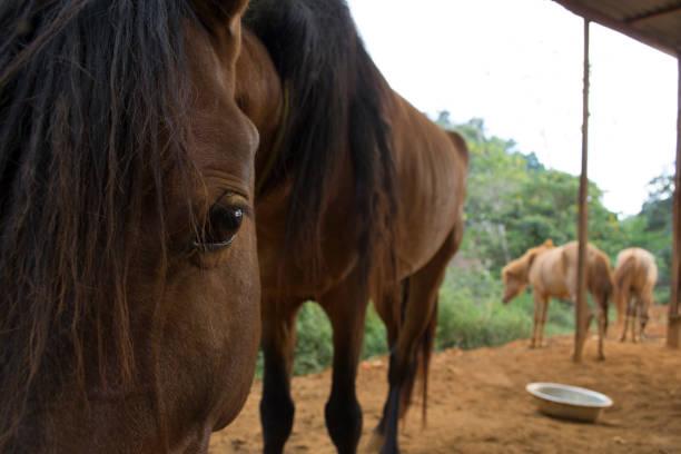 Hungry horses picture id1071806522?b=1&k=6&m=1071806522&s=612x612&w=0&h=fvctcntplxv2f1vta9kcc1xvd1oxmbajrueq9j2 tie=