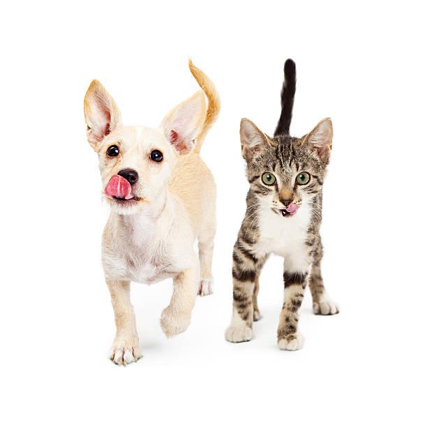 Hungry kitten and puppy walking forward picture id482895778?b=1&k=6&m=482895778&s=612x612&w=0&h=tq68tnuss grcdlfzz8ooqef70cf0rdtht1ocv6jwyy=