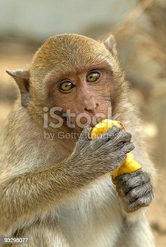 hungry monkey eat banana