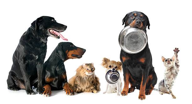 Hungry pets picture id462343131?b=1&k=6&m=462343131&s=612x612&w=0&h=2ycevvgy5phyymekeasd nyzb bqzvw4azqnh odhvc=