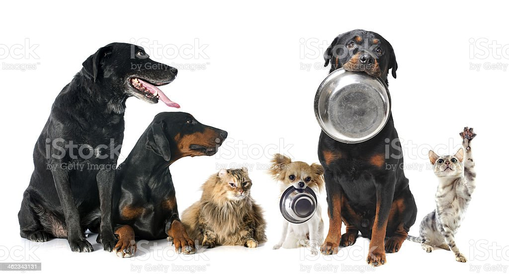 hungry pets stock photo
